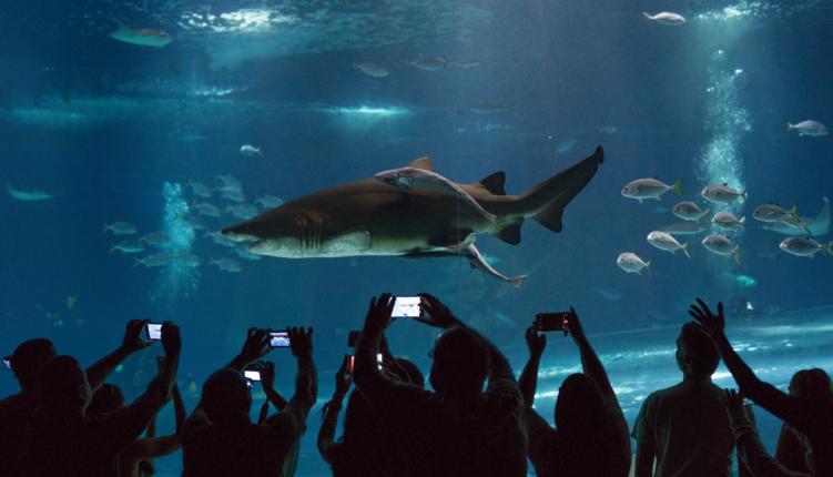 AquaRio - O maior aquário de água salgada da américa do sul