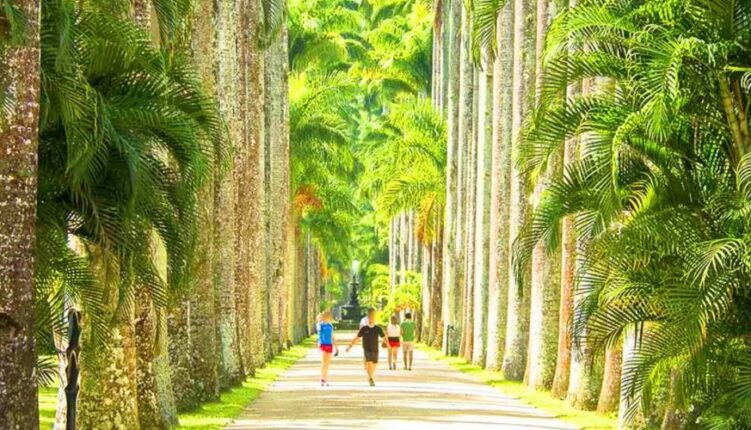 Caminho das palmeiras - Jardim Botânico do Rio de janeiro